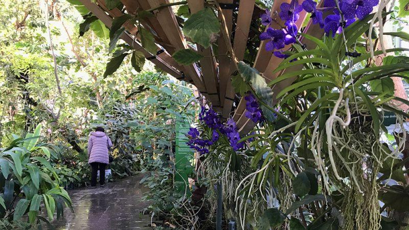 Mille et une orchidées - Mouffetard Addict